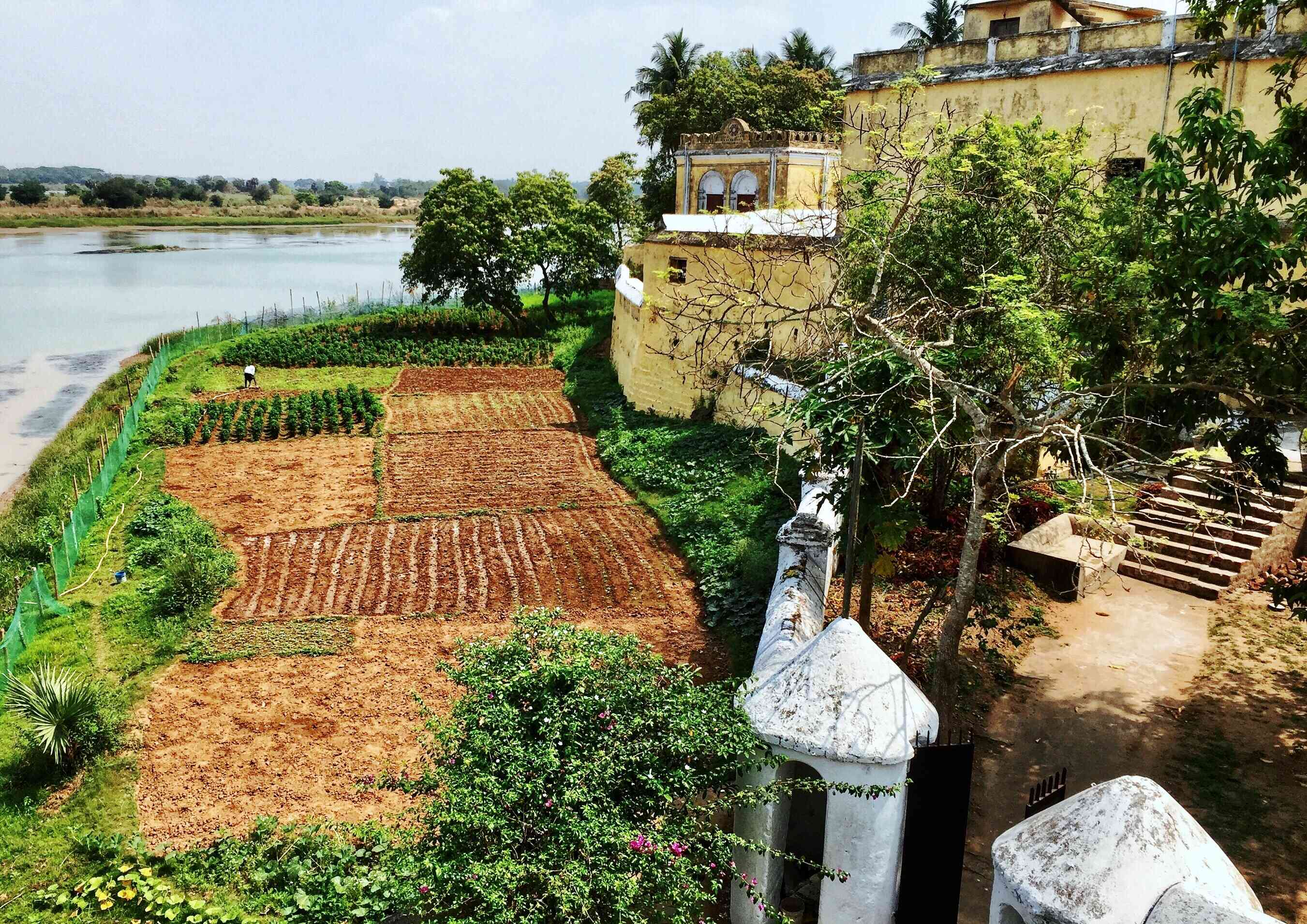Small crop field next to an old building at Killa Aul, Odisha.