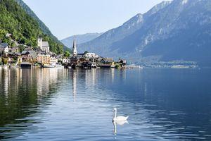 A swan swimming by buildings in Lake Hallstatt