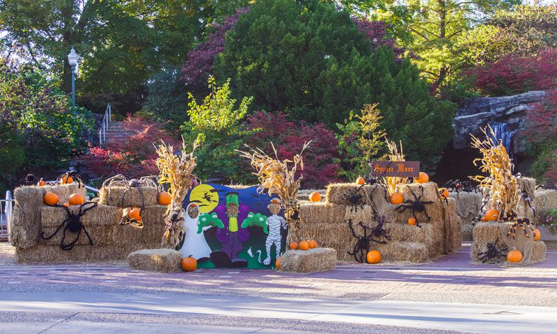 O Brien Auto >> Halloween in St. Louis: Boo at the Zoo