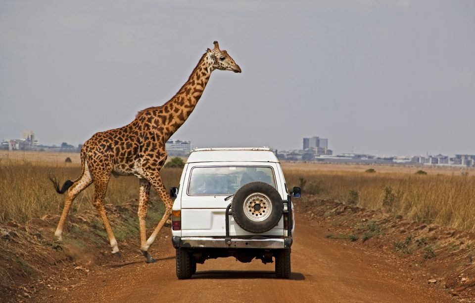 Giraffe crosses dusty road with Nairobi in the background
