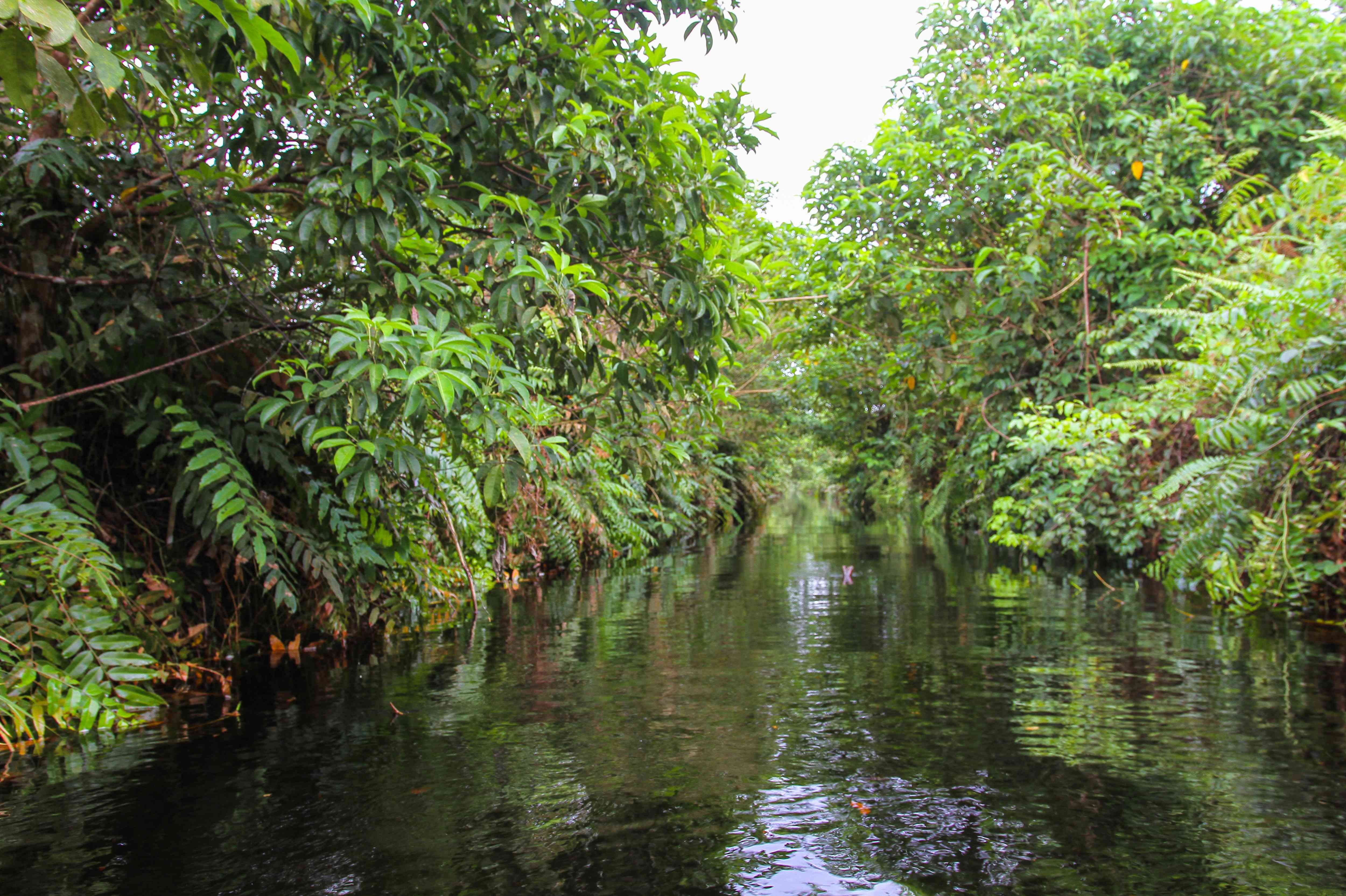 River in a swampy national park in Sumatra