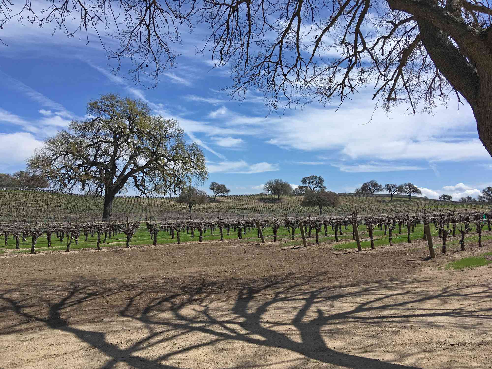 Bare Trees On Field Against Sky - stock photo Photo taken in Paso Robles, United States