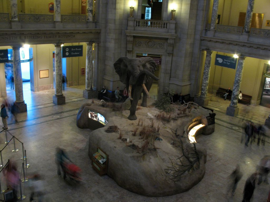 American Natural Museum of History Lobby