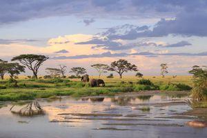 elephants in Tanzani