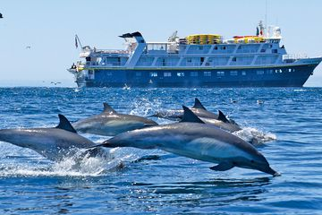 Dolphins in Baja California.