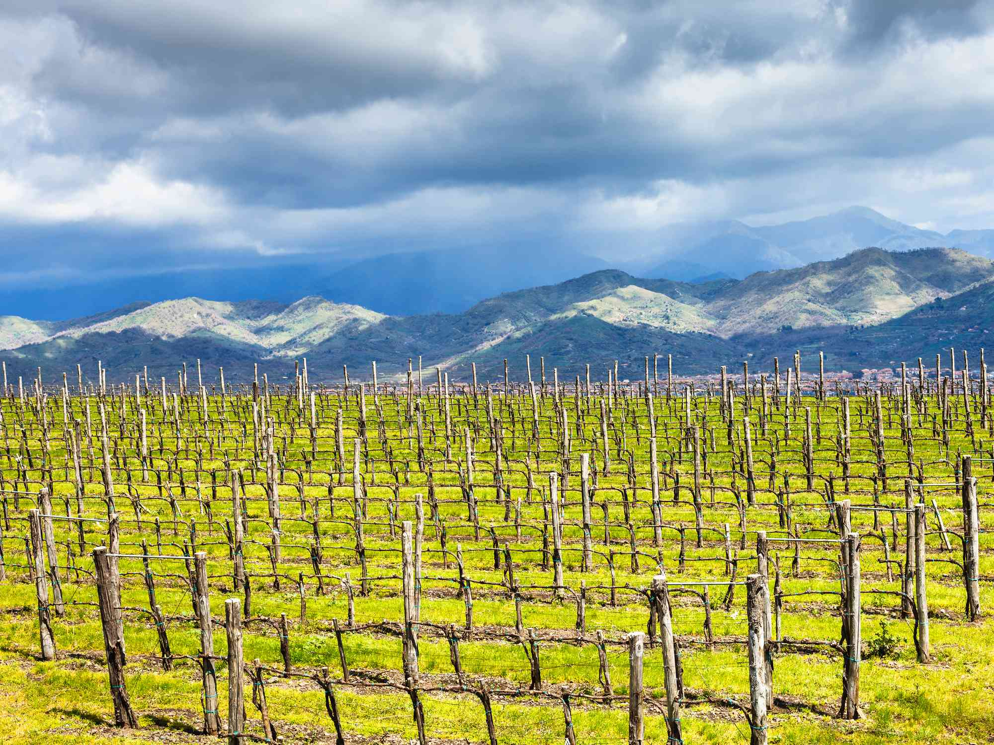 Springtime on Mt Etna with vines