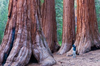Muir Woods How To See The Big Trees Near San Francisco