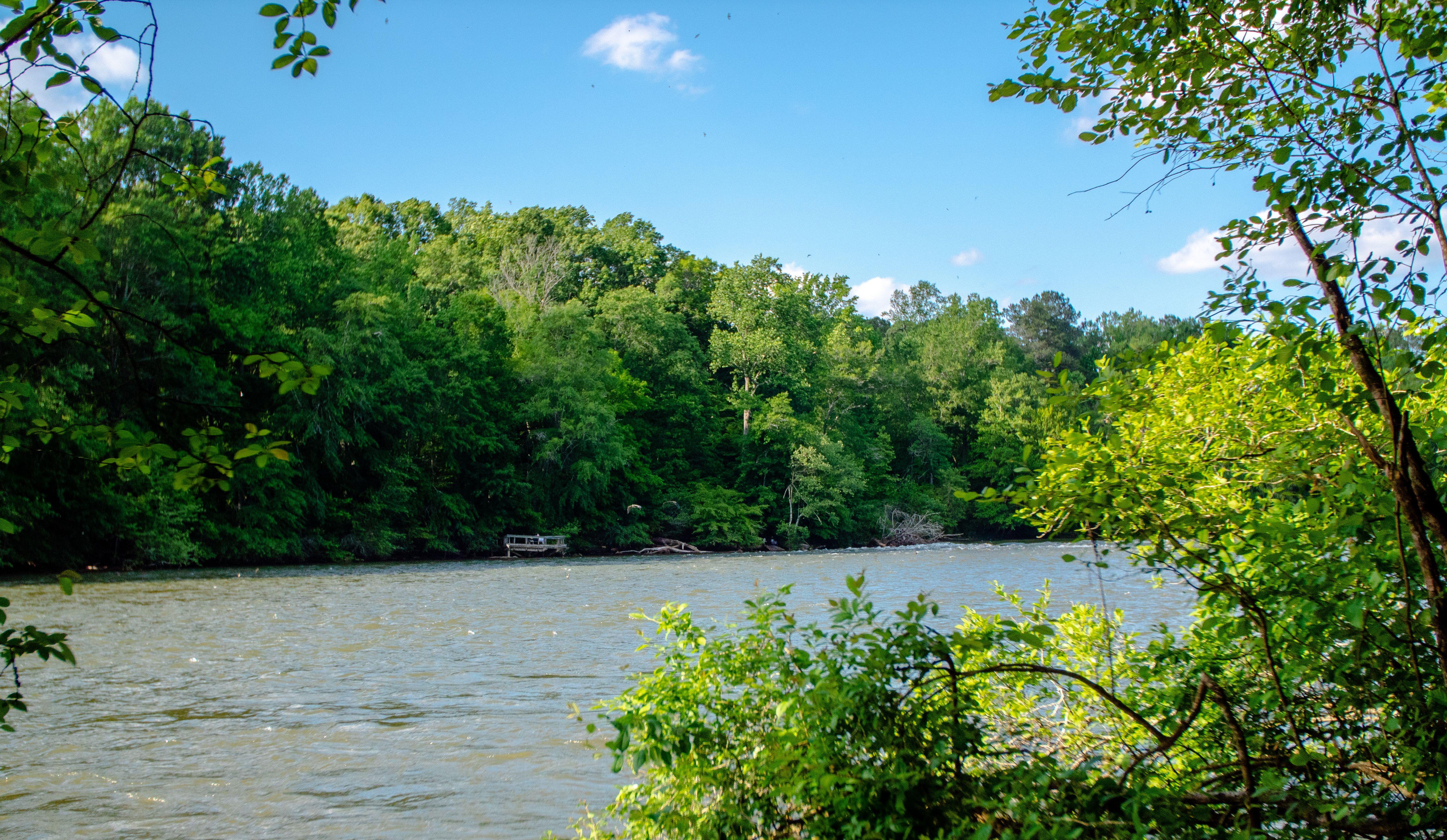 El río rodeado de plantas verdes