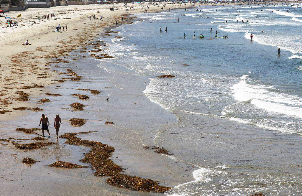 Beachgoers gather near dying kelp near Scripps Pier on August 7, 2018 in San Diego, California. A researcher said the area has seen above average amounts of dying patties of kelp recently which is attributed to warmer ocean temperatures. The sea surface temperature at Scripps Pier was measured at an all-time high of 78.8 degrees on August 3, the warmest since record keeping began at the pier 102 years ago.