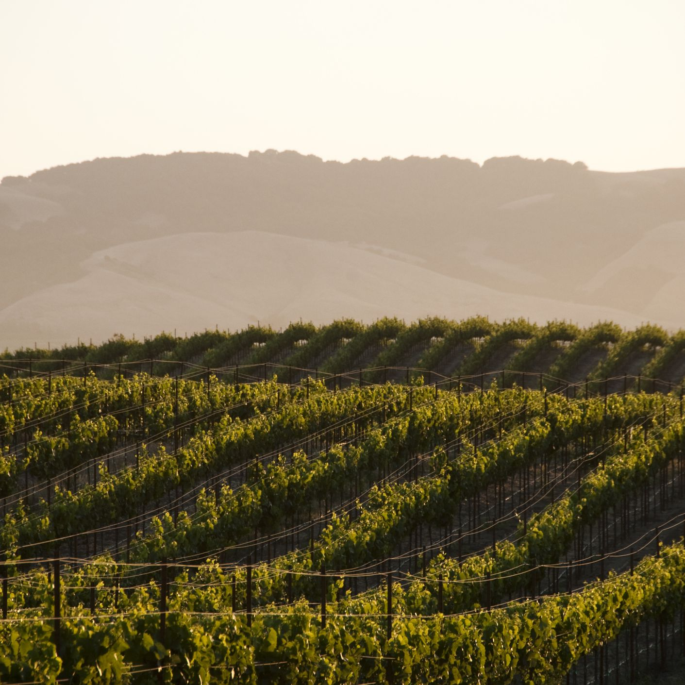 The Weather and Climate in California's Wine Country