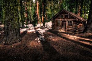 Cabin in the sequoia forest of Yosemite National Park