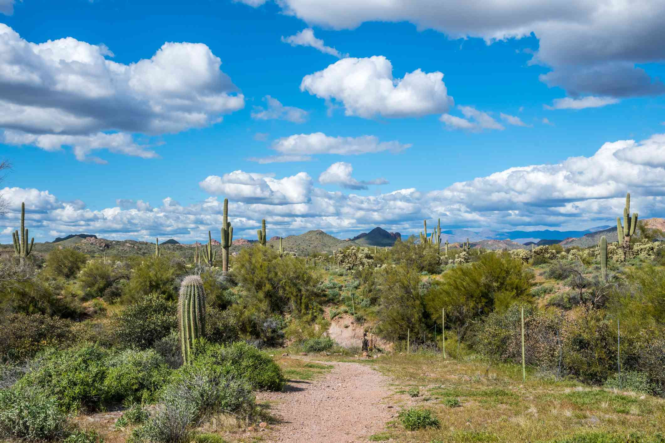 Trail Superstition Mountains