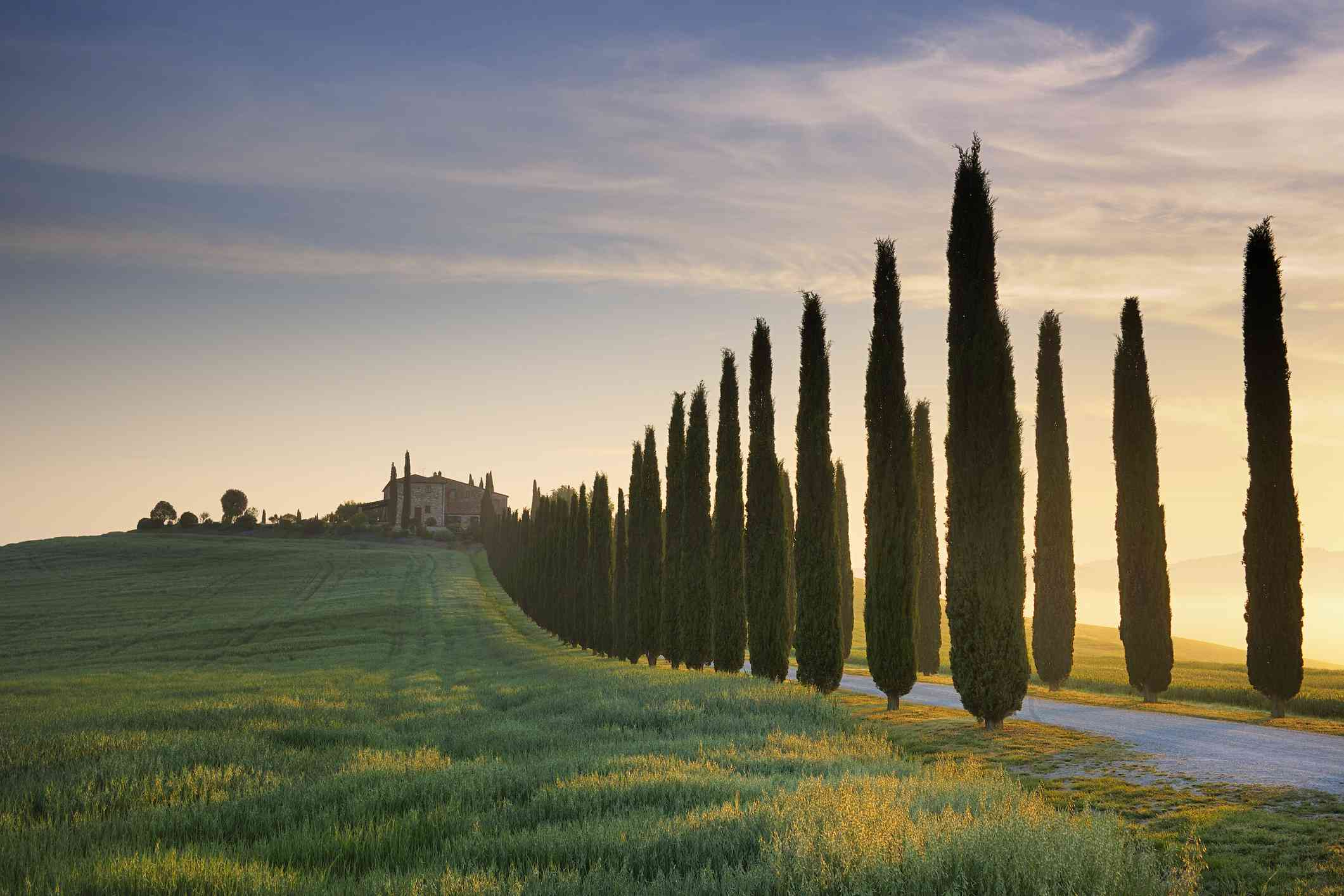 Typical Tuscany landscape with cypress trees