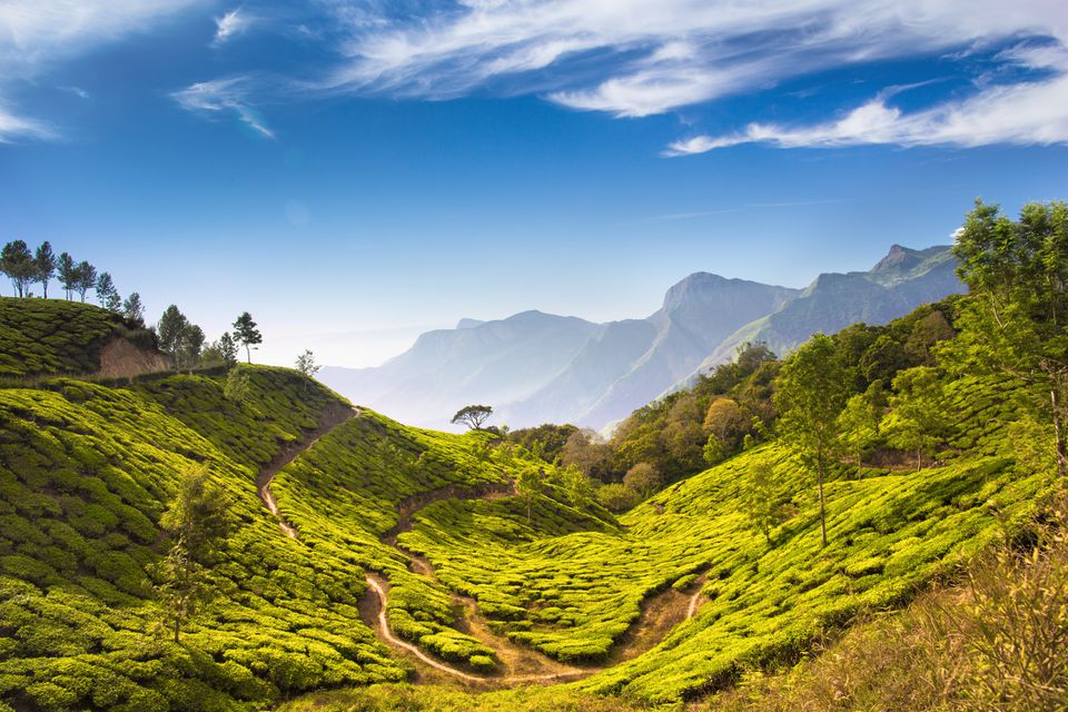 Bright and vivid landscape of green tea plantations in India Kerala, Munnar.