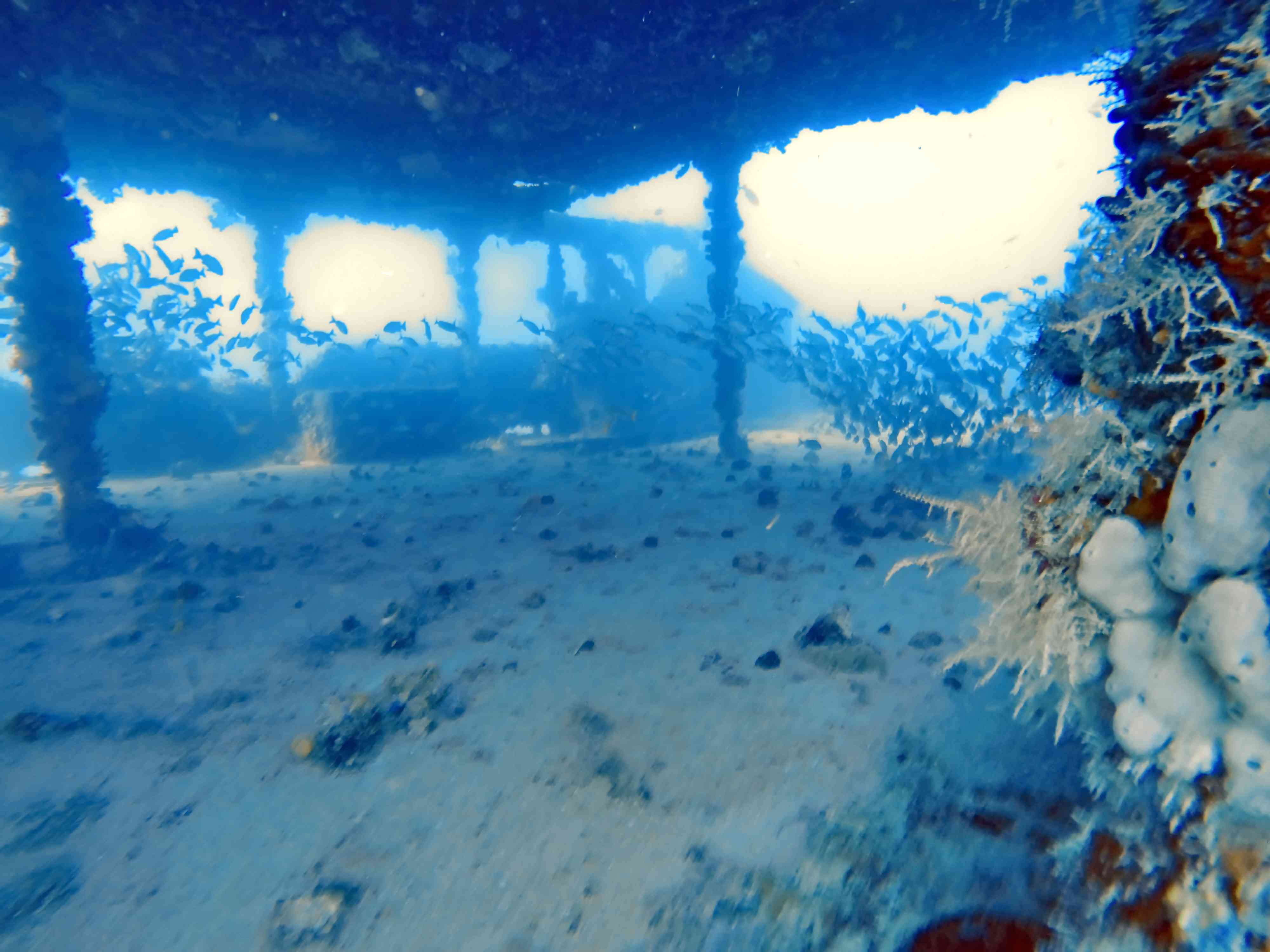 School of fish on a wreck