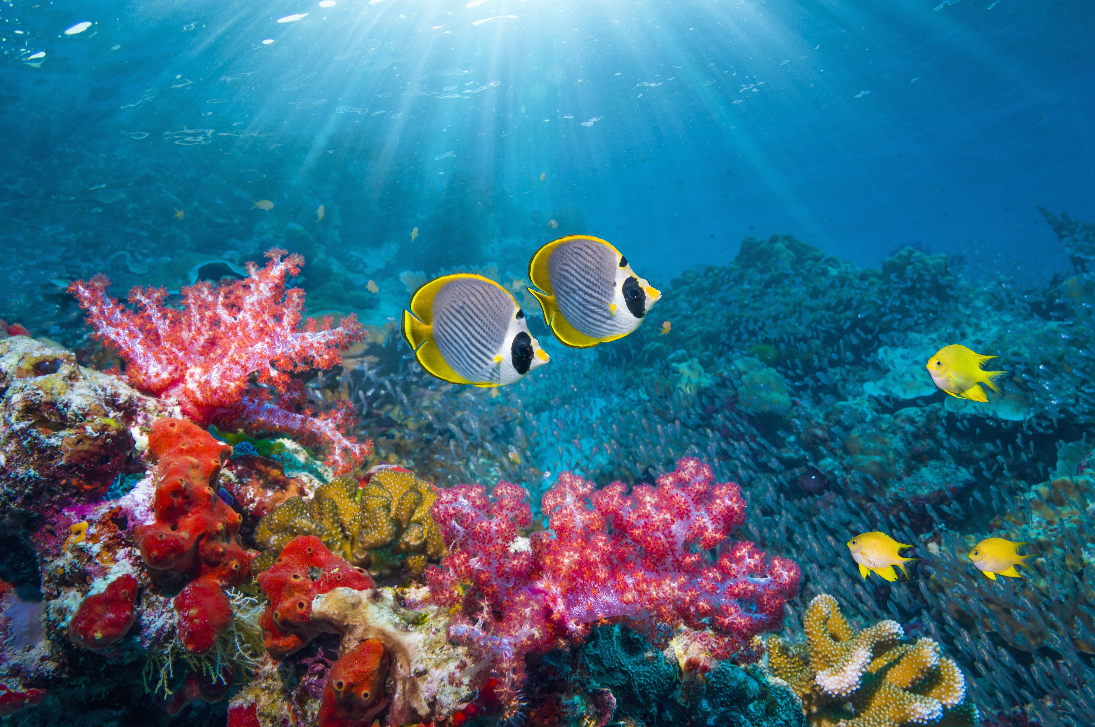10 Ways to Protect Coral Reefs When You Travel
