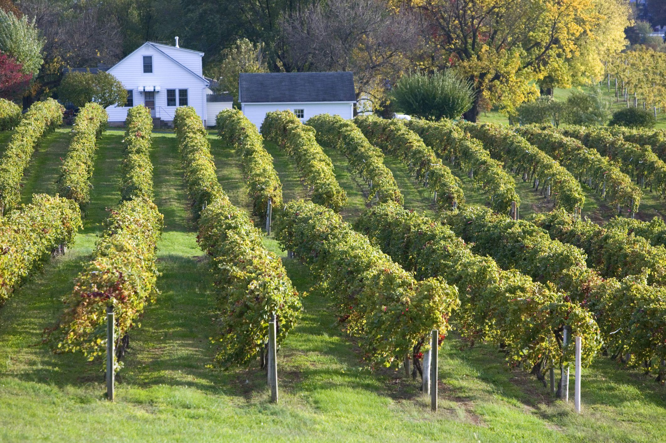 Oldest Vineyard Area in the USA, Augusta, Missouri, USA