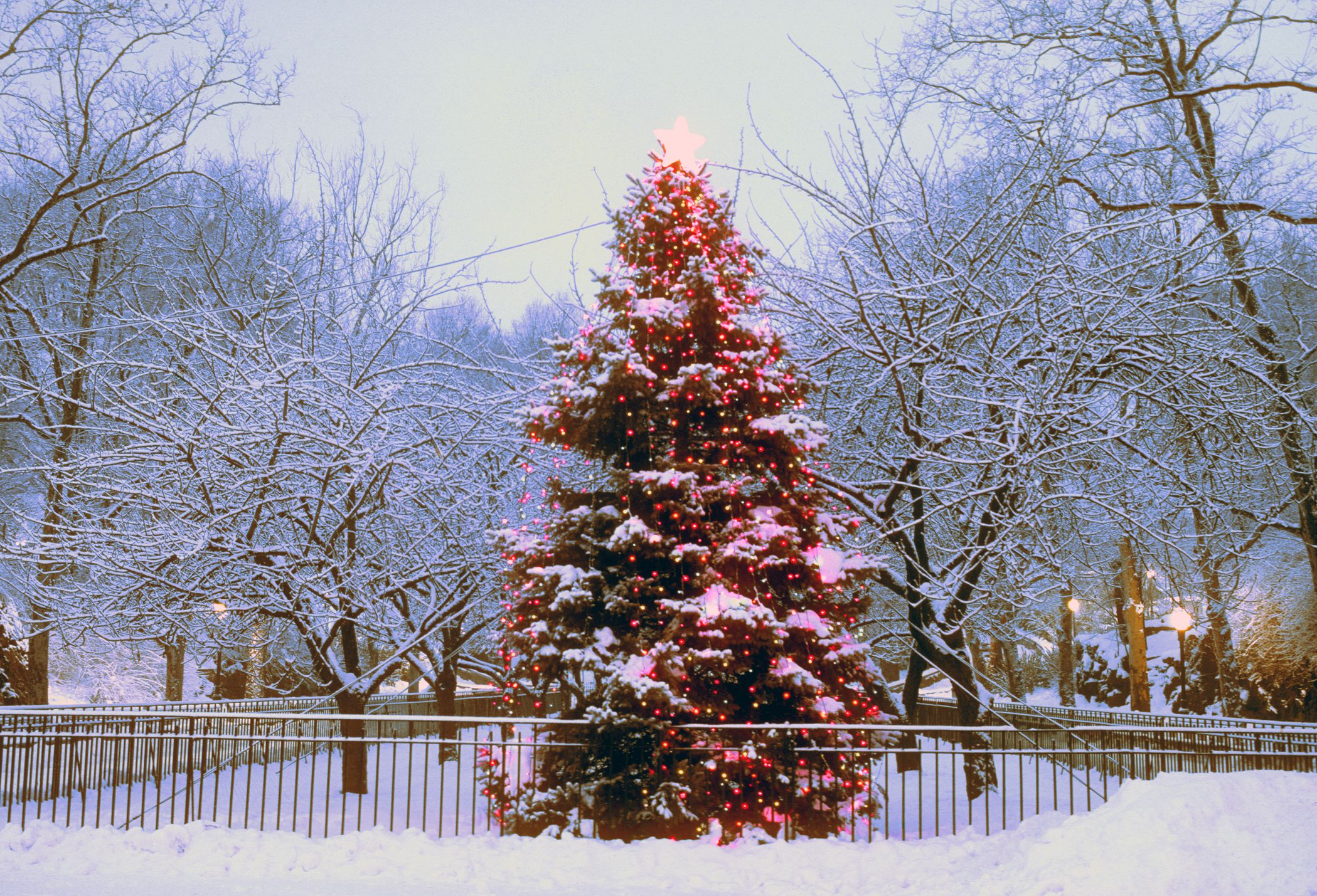 Public Christmas tree in Carl Schurz Park, NYC.
