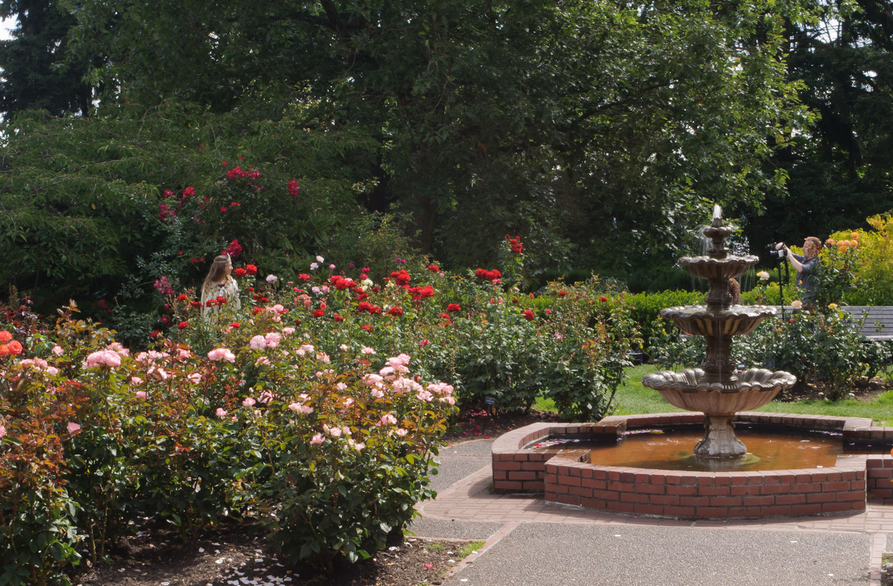 Roses In Garden: Things To Do At Washington Park In Portland Oregon
