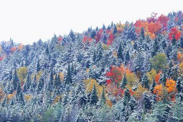 Fall color trees with snow at Haystack Mountain