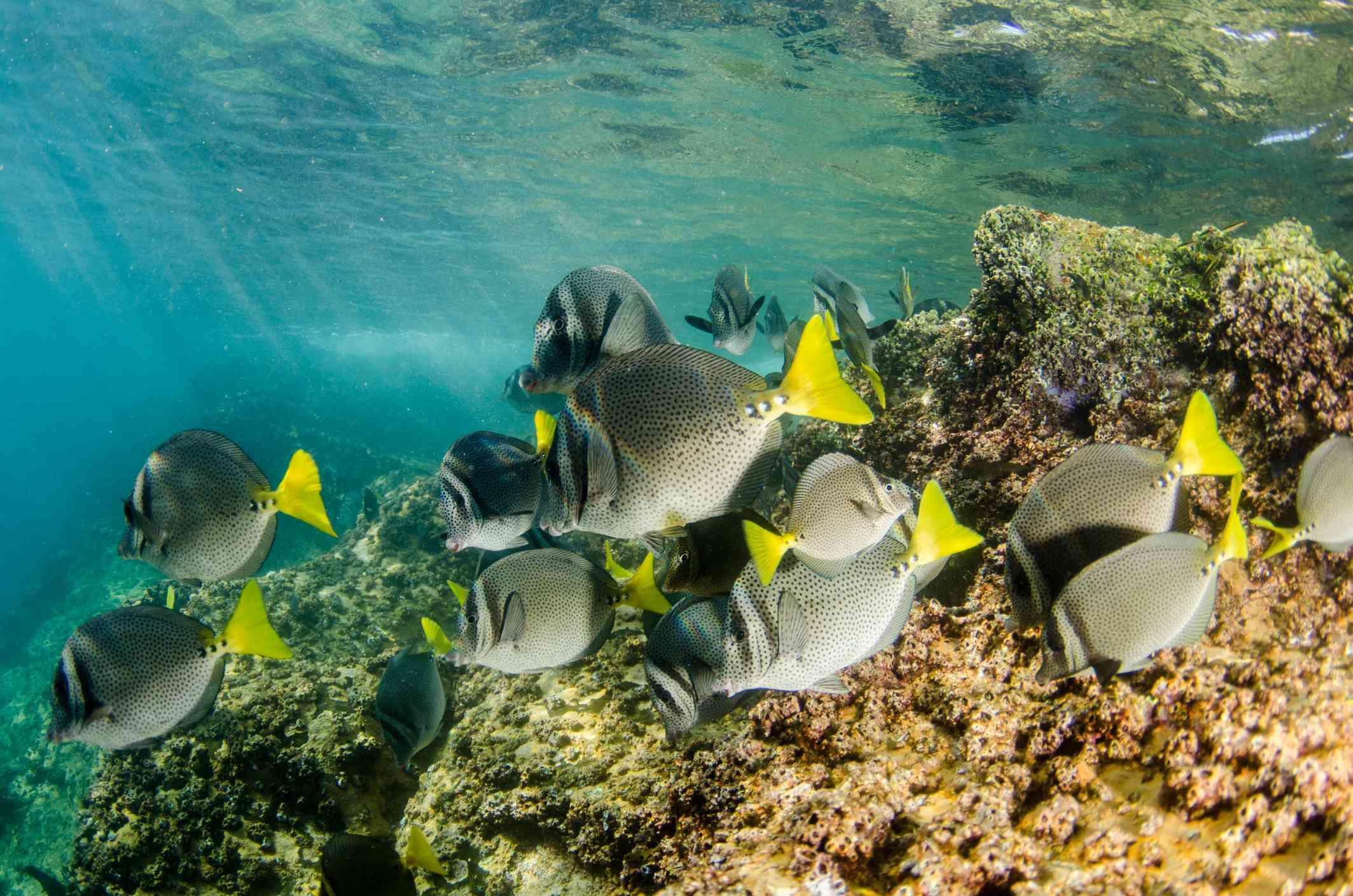 Colorful fish in Cabo Pulmo