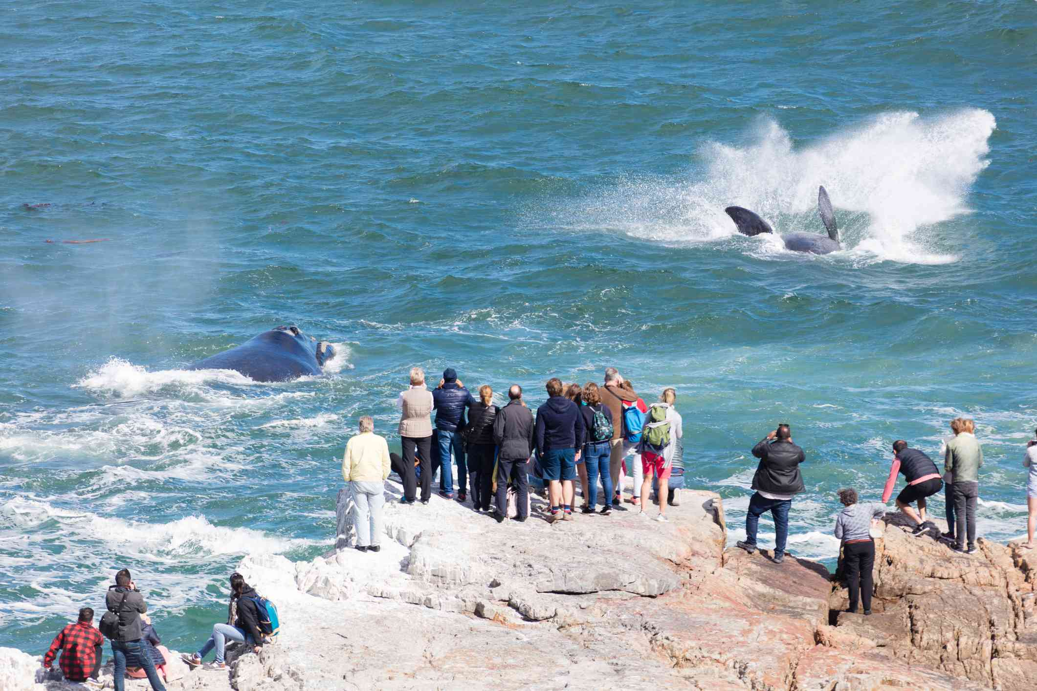 Tourists watching whales from the cliffs near Hermanus, South Africa