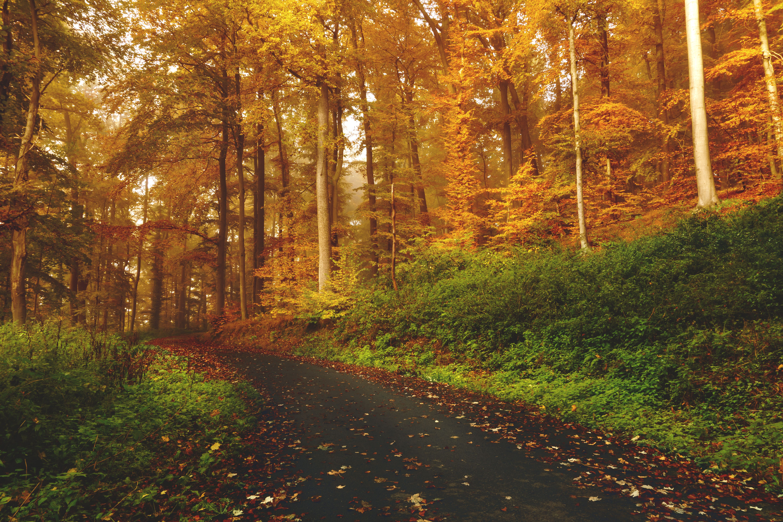 caminata de otoño