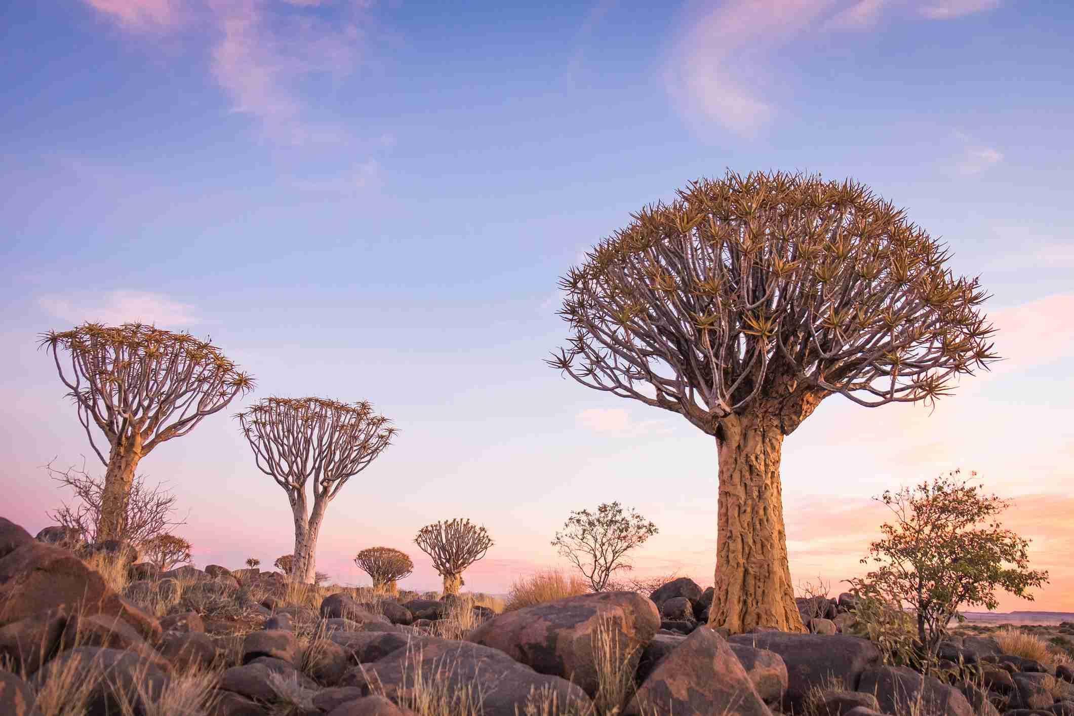 Kostenlose online dating sites namibia