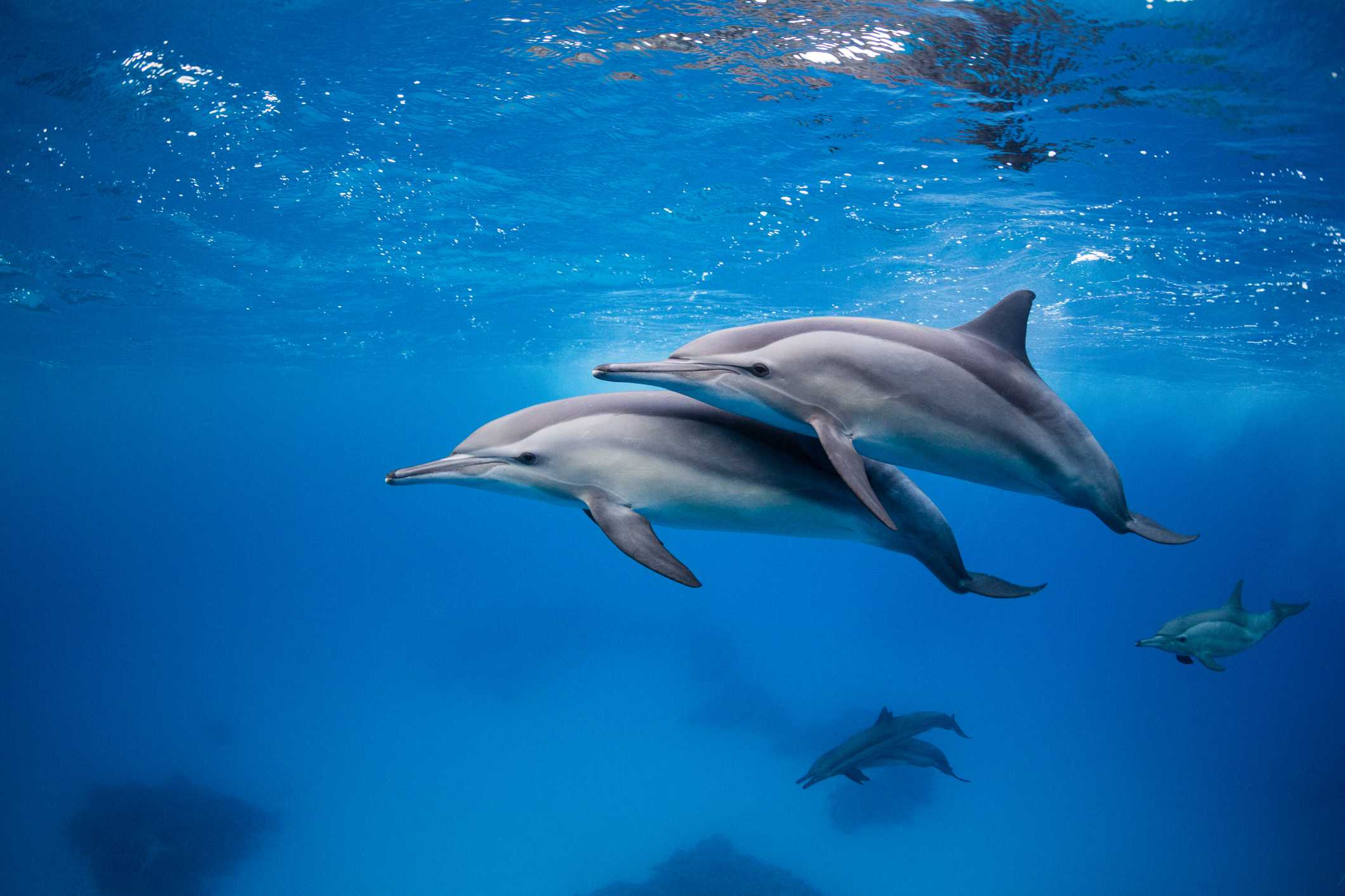 Africa's Best Whale & Dolphin-Watching Destinations Spinner Dolphins