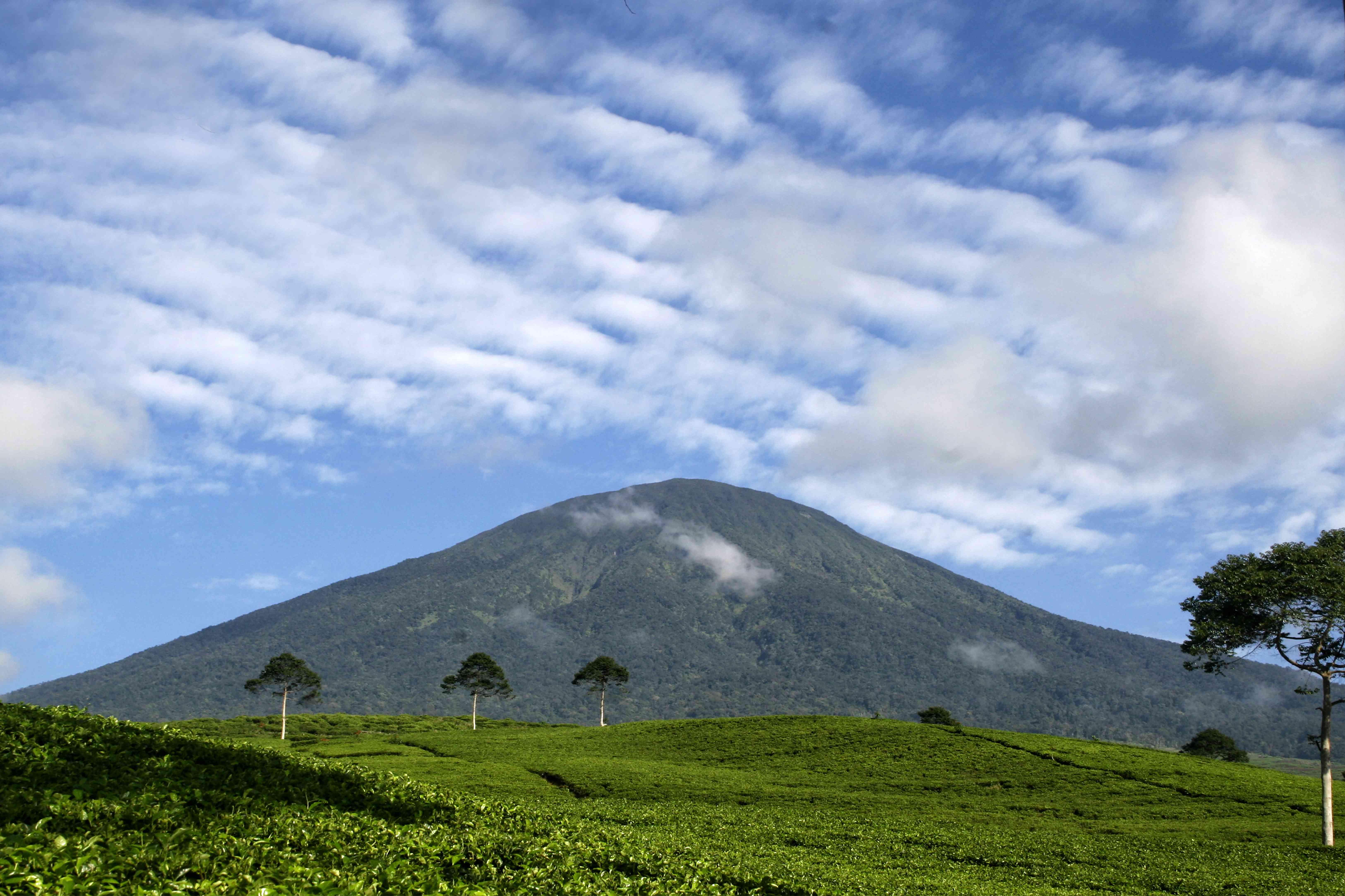Mount Dempo and tea plantation, Pagar Alam, South Sumatra, Indonesia