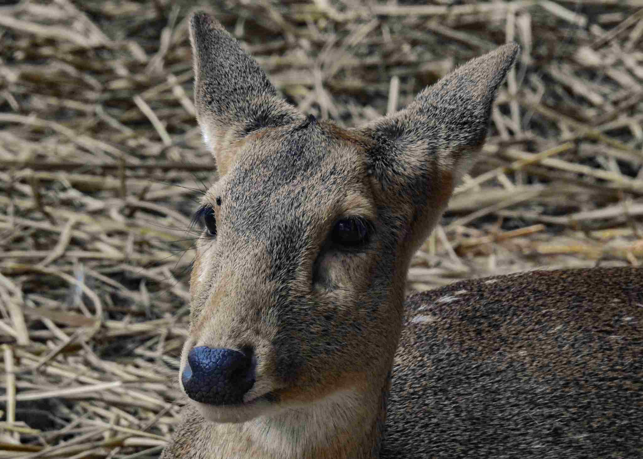 Deer in Delhi.