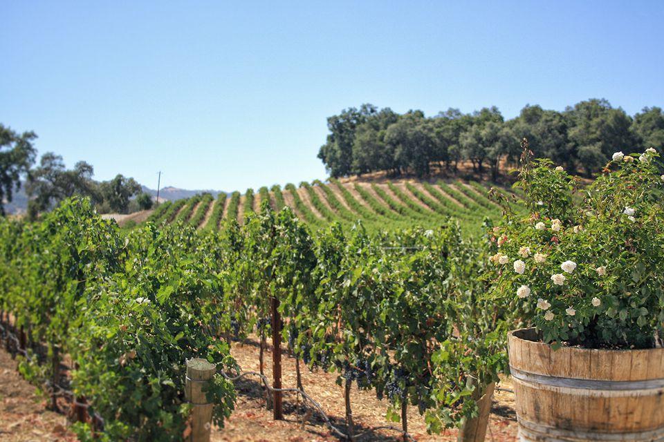 Vineyards at Justin
