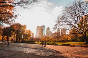 Central park during autumn
