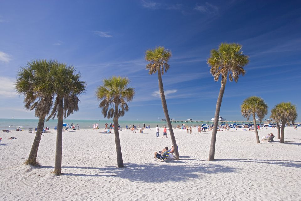 Palm trees at Clearwater Beach, Florida under a blue sky