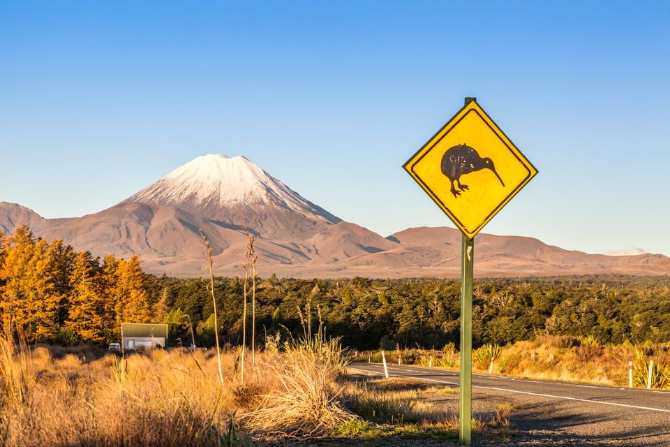 snow-capped Mt. Tongariro with yellow kiwi warning road sign in foreground