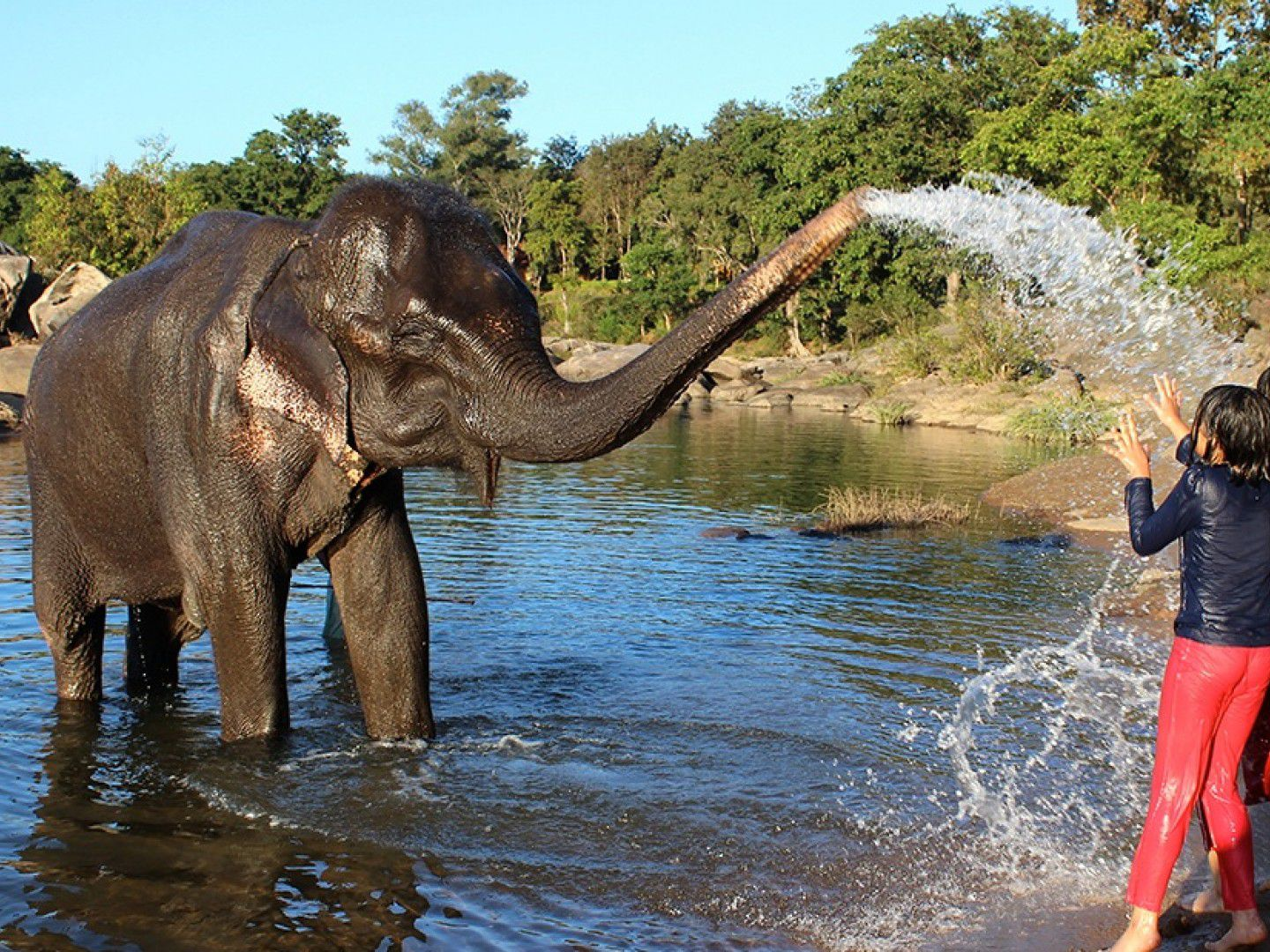 Where to See Elephants in India: 4 Ethical Places