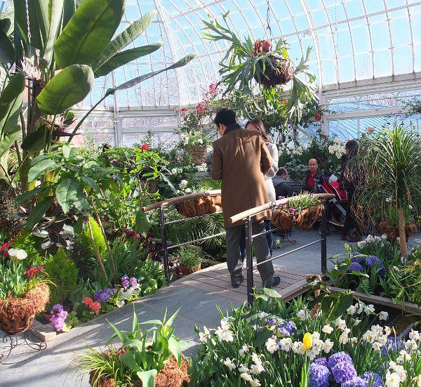 visitor in Westmount greenhouses.
