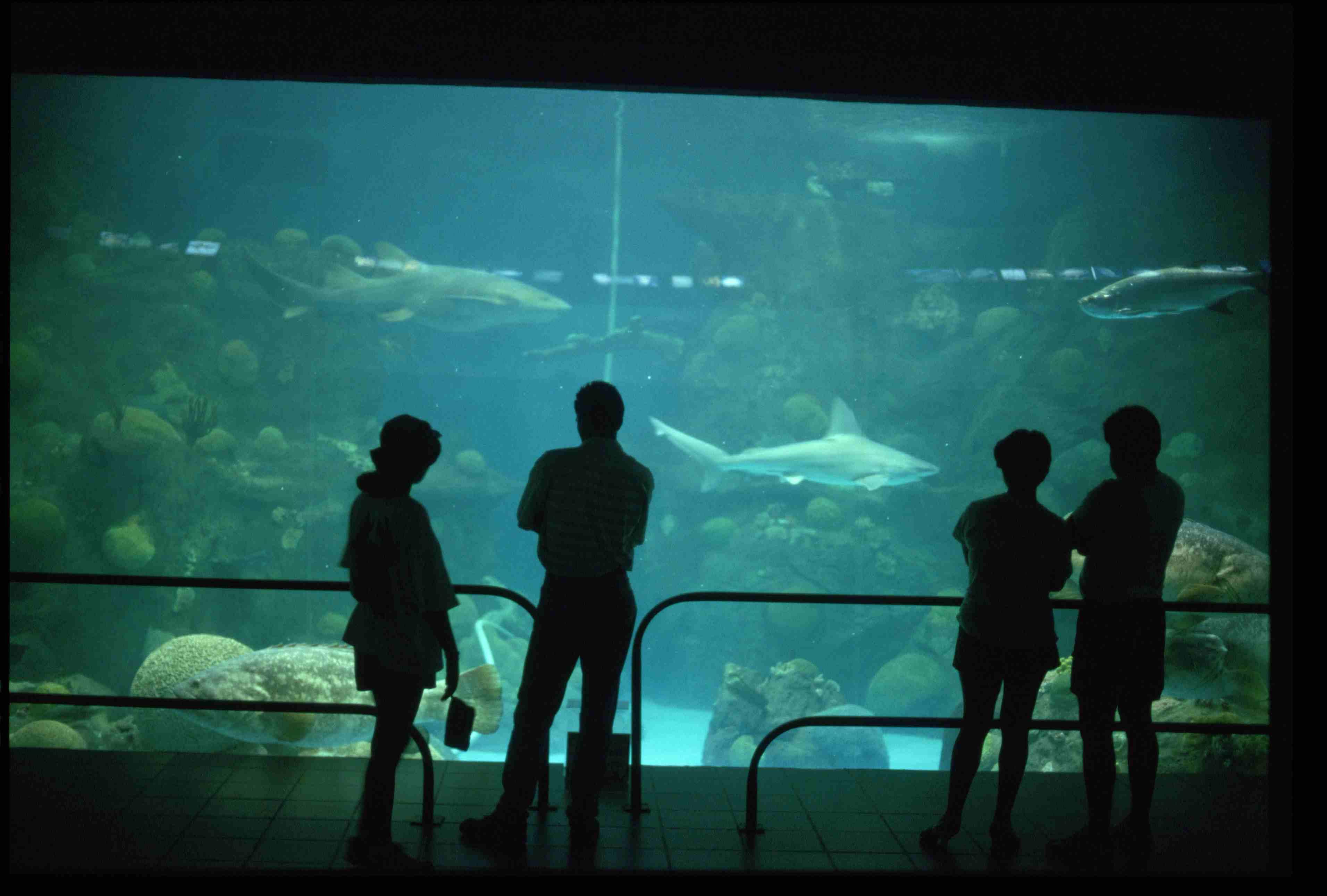 Visitor Silhouettes at the Veracruz Aquarium