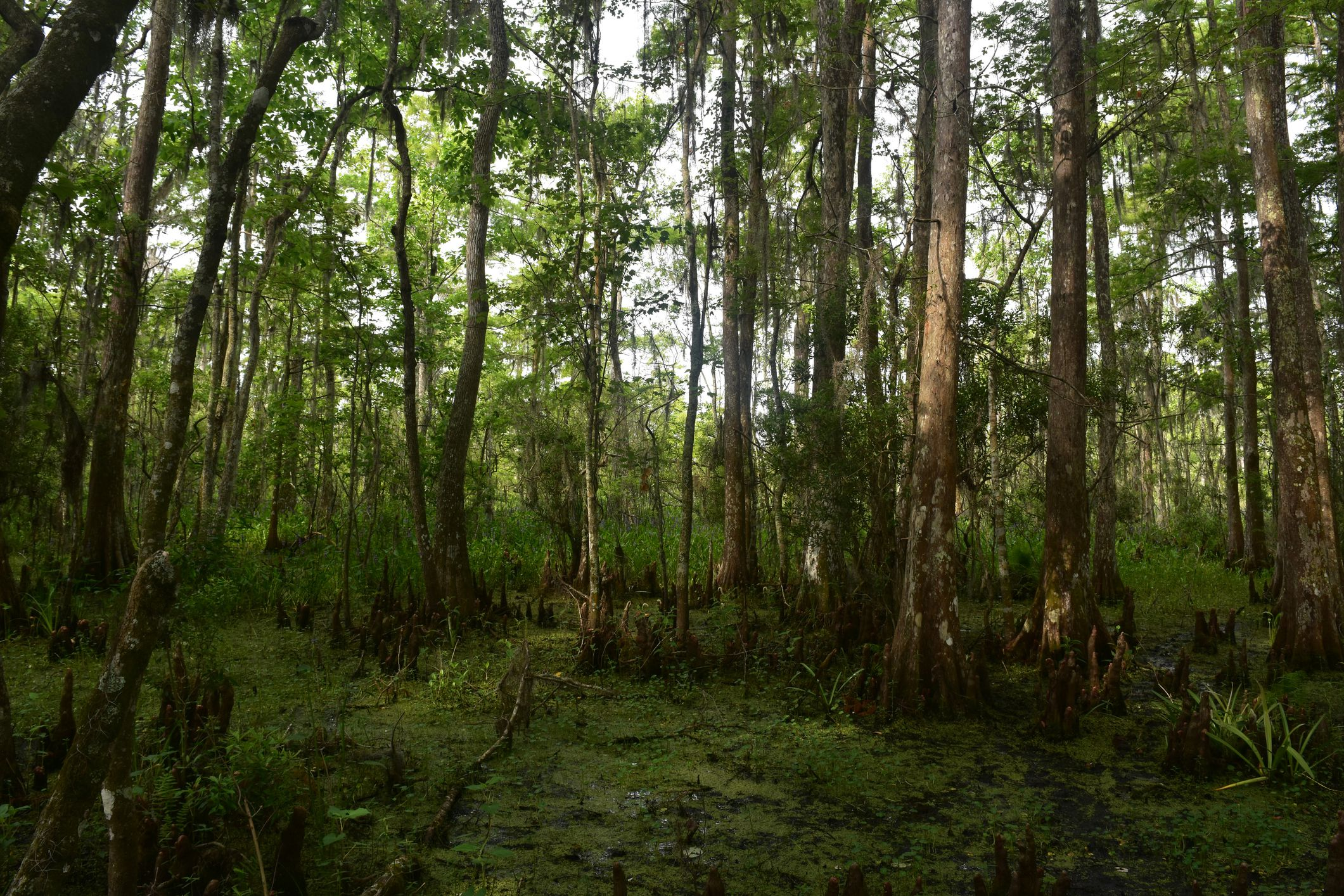 Barataria Preserve in New Orleans