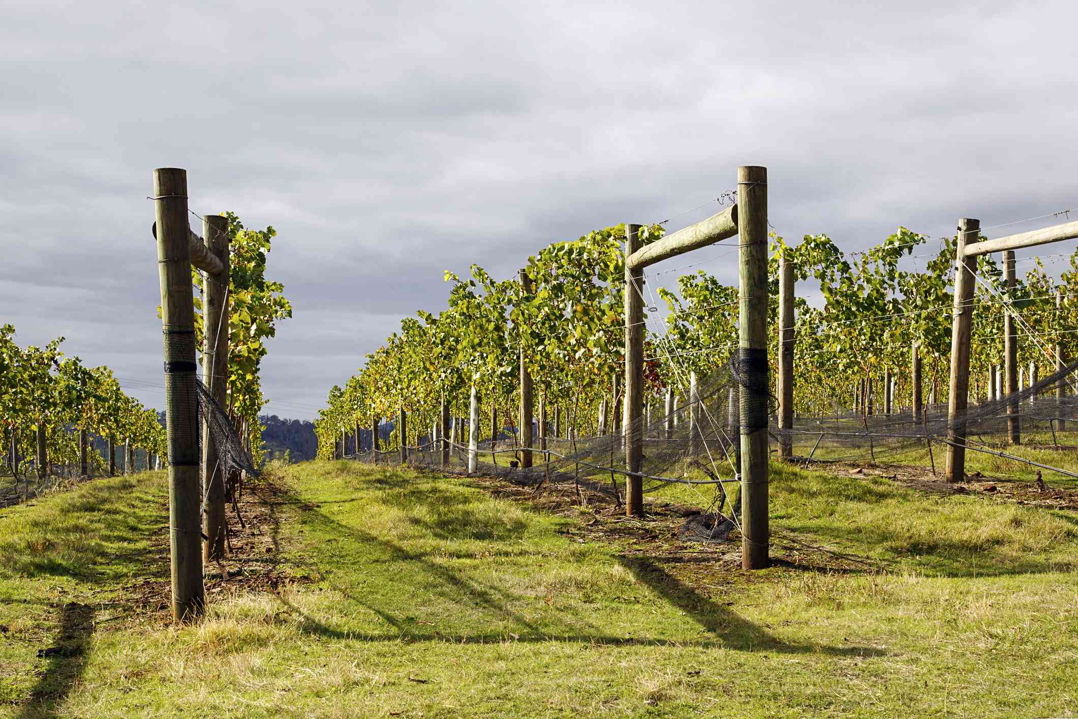 Tamar Valley Winery