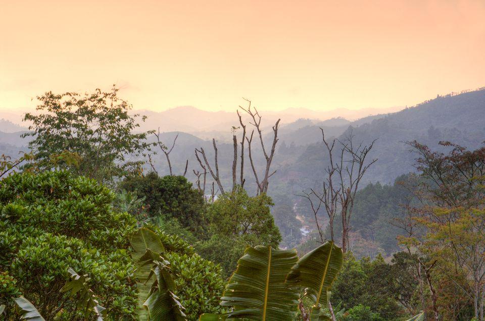 Dusk in the valley.Ranomafana National Park, Madagascar.