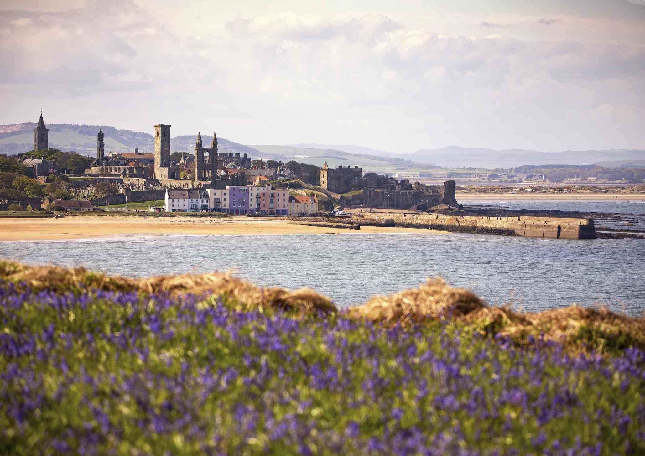 ooking out over the bay towards the town of St Andrews, with a field of bluebell flowers in the foreground