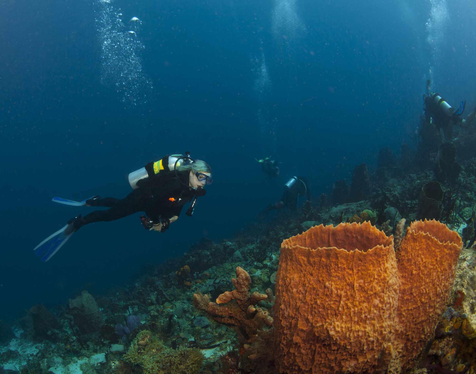 Scuba St Lucia