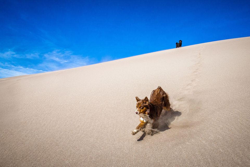 Dogs playing in sand