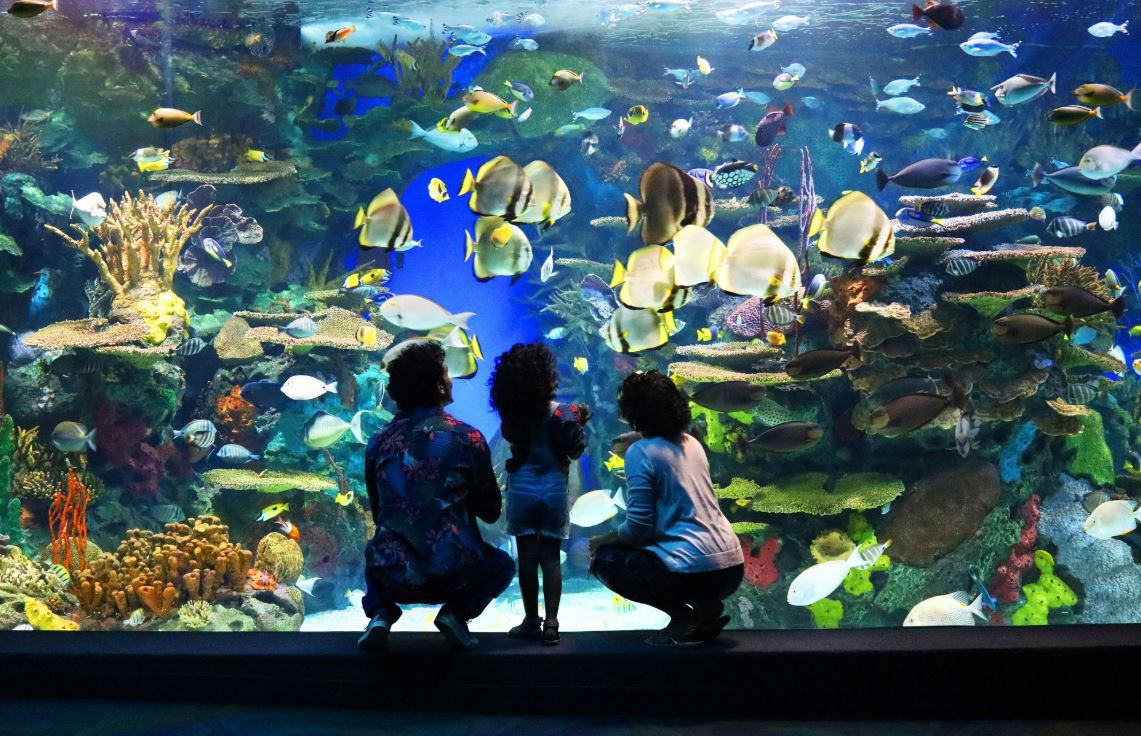 Myrtle Beach Hotels >> Guide to Ripley's Aquarium of Canada