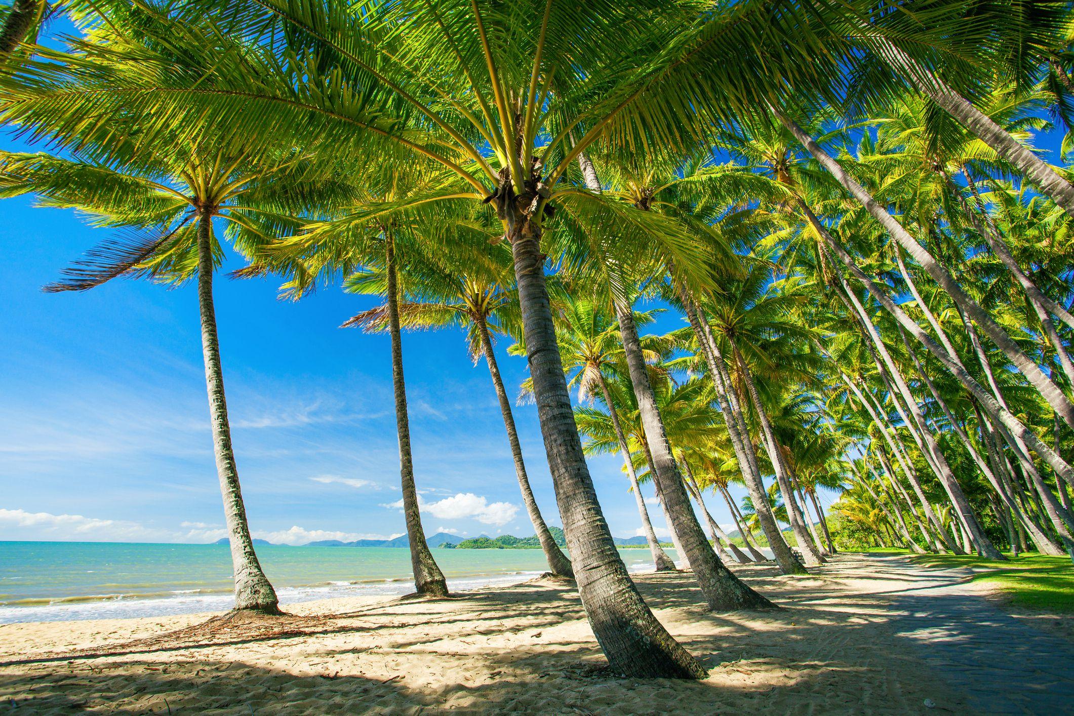 Palmeras en la playa de Palm Cove en Australia