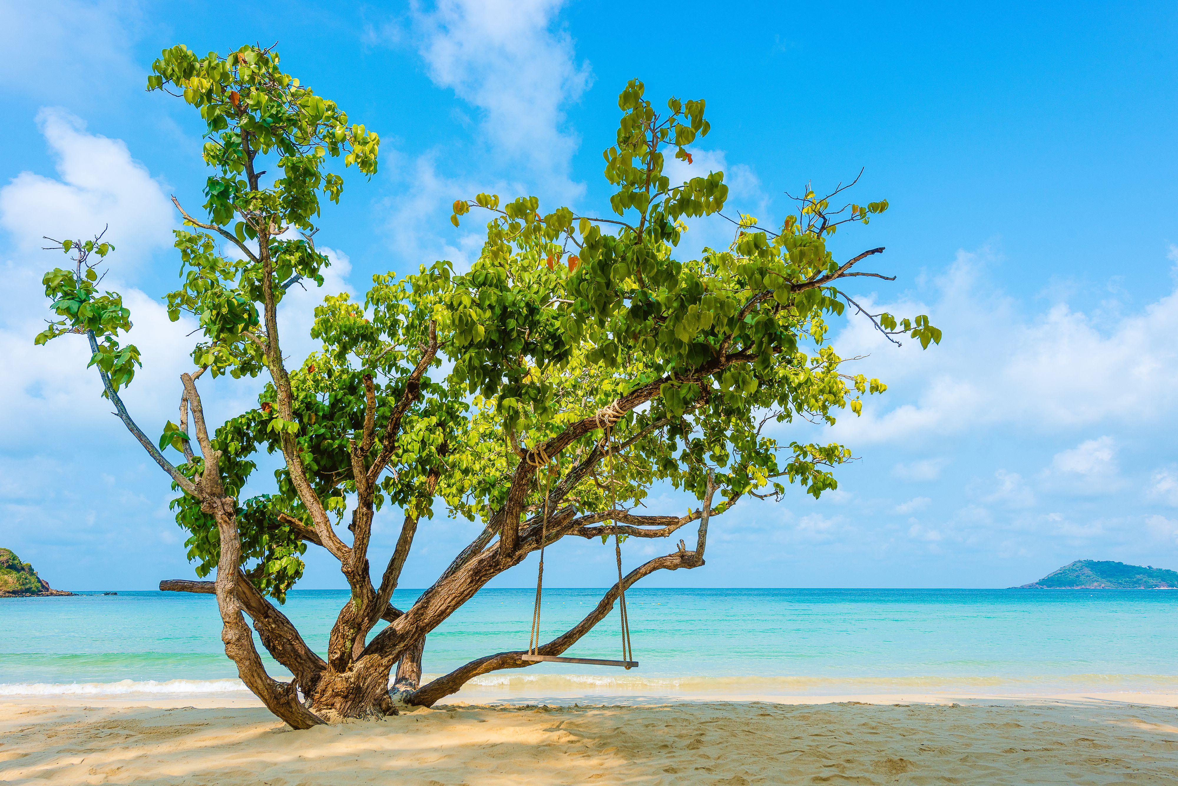 Tree on a beach on Koh Samet, Thailand