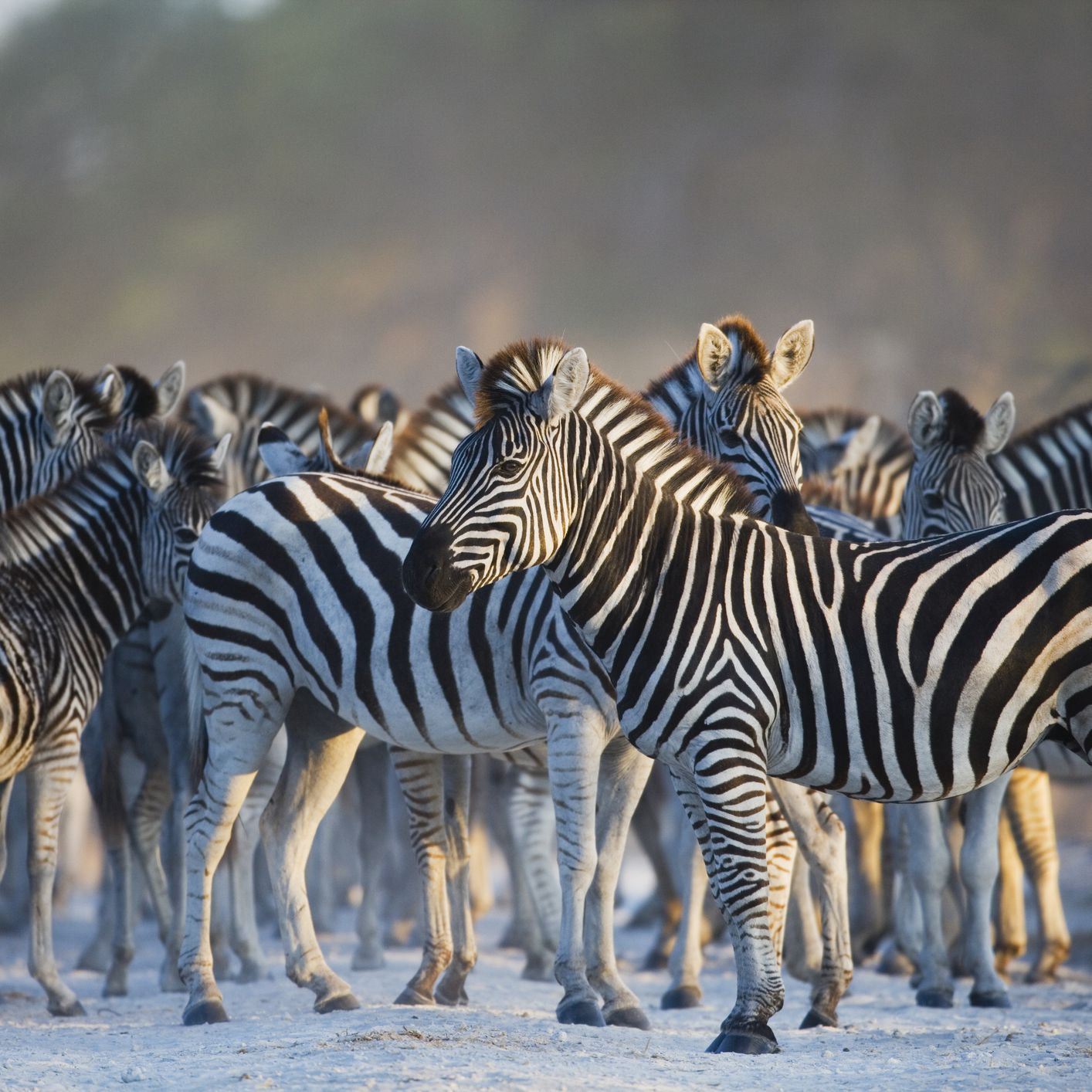 Africa's Top 10 Safari Animals and Where to See Them