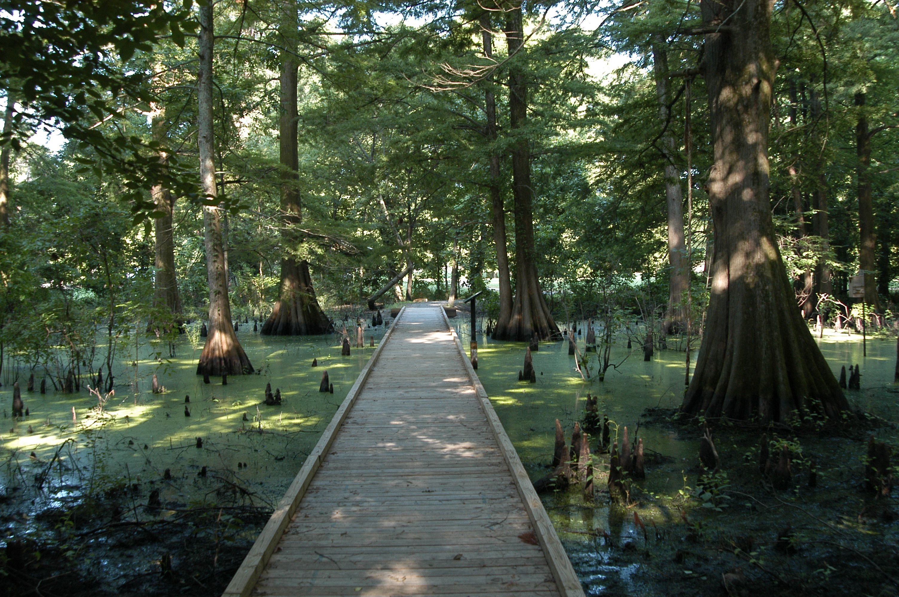 Greenville Cypress Preserve