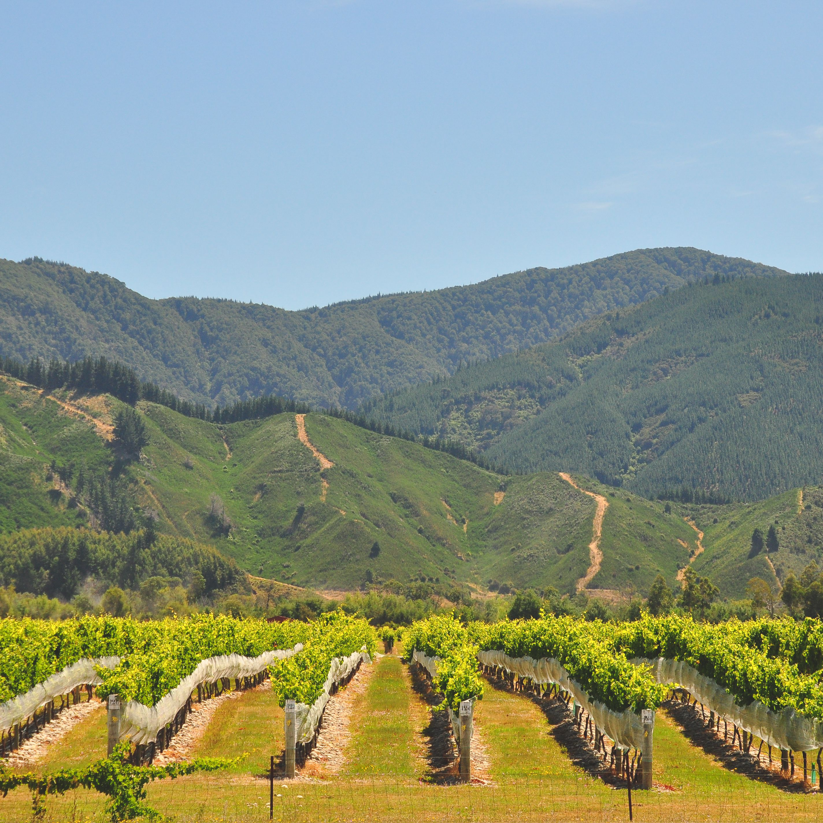 The Complete Guide to New Zealand's Wine Regions